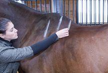 Wissen rund um's Pferd
