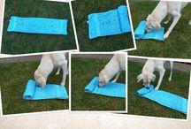 honden spelletjes