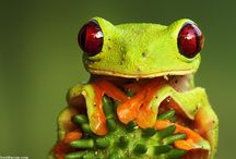 amphibians and reptiles / by Elfware