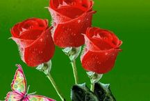 FRIENDS / Good friends CARE for each other. CL0SE friends understand each other. TRUE friends stay forever. Beyond words, beyond time. These three red roses for our friendship my dear friend :-) '' HAPPY FRIENDSHIP DAY ''