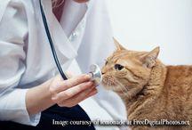 Uniforme veterinario