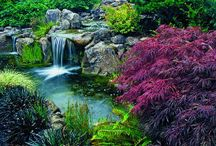 water gardening and ponds / by Janice Johns