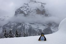 Labcold Penguin on the top of Europe! / Labcold penguin travelled to the Jungfraujoch, otherwise known as the top of Europe at 3,571 metres above sea level with Doctor Courmarin on a fieldwork trip.