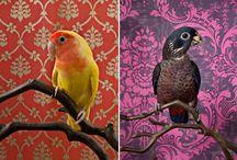 Lintuset / Lintuja! valokuvia, piirrettyjä, maalattuja. :)
