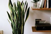 indoor plant displays
