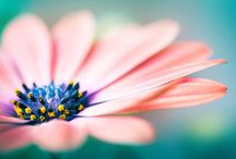 Flowers / Flowers in Photography