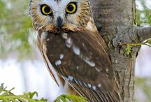 Owls are a Hoot