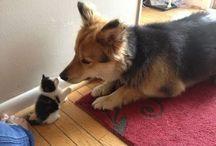 cani e gatti i videi divertenti