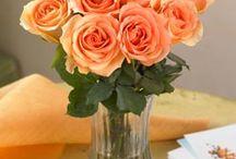 Flowers  / by Steph Zimmerman