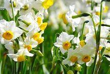 Flowers / ♣♣♣♣♣