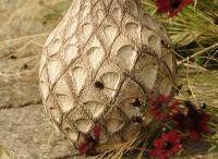 Su Cloud Ceramics / Hand built ceramics, inspired by nature.