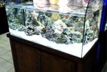 ReefView Aquariums / Aquarium with built in Artificial 3D Reef Background.  Push window design for easy access.