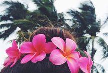 Hawaii-Ma ke hale