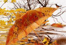 Animacje pory roku - jesień