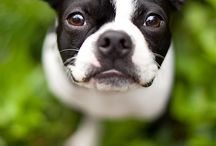 Pet Photography / by Emily Bryan