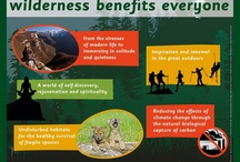Wilderness experience