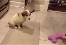 Cagnolini coccolosi