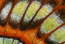 Butterfly Wings Close-up