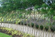 żywe ogrodzenie