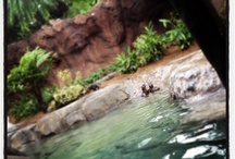 Discovery Cove  / by On the Go in MCO