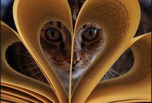 23. Cat Photo's