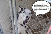 Adoptable Dogs / Dogs available for adoption.  #adoptdontshop