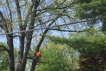 Mount Olive New Jersey Tree Services Companies
