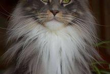Кошки и котята/Cats and kittens