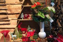 Kerst met anthuriums / De anthurium is ook in kerststukken een prachtige verschijning.