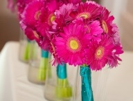 Bright Pink and Teal