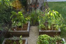 Zahrada / Zahrada