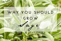 Gardening Tips - herbs, veg etc