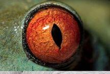 animals'eyes