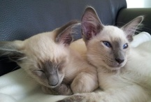 Our cats at home
