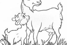 vymalovánky zvířata