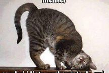 frasi e gatti