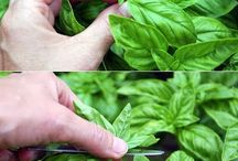 Gardening tips and idees