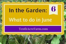 What to in the garden / Garden diary