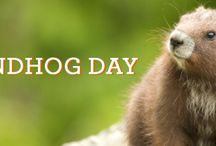Holidays: Groundhog Day / Groundhog Day resources -- articles, lessons, ideas / by The Learning Effect