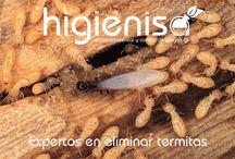 Tratamientos para eliminar termitas. Plagas de la madera