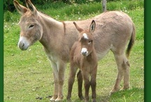 donkeys and our favorite little creatures