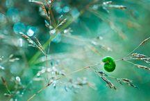 zöldben