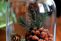 Cloche Displays & Apothecary Jars