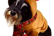 Reindeer  outfit