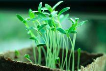 PlantOwnGermination