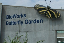 Bioworks Butterfly Garden / A unique outdoor butterfly exhibit which focuses upon butterflies native to West Central Florida / by MOSI Tampa