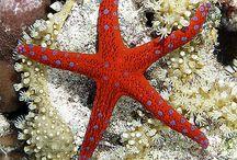 Starfish☆