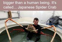 homeschool sea creatures...