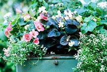 garden decorating / by Mary Fluaitt