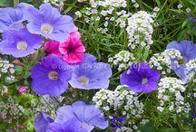 Garden colour ideas